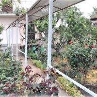 Продается дача в кооп. Садовод в черте г. Евпатория до моря 1 км